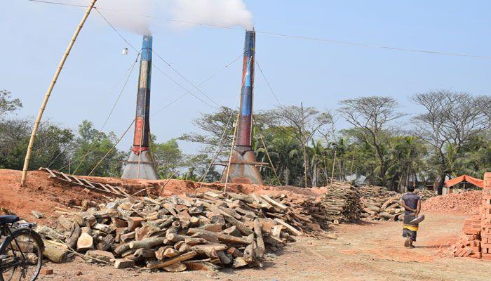 নোয়াখালীতে দুই ইউপি চেয়ারম্যানের অবৈধ ইটভাটায় পুড়ছে কাঠ